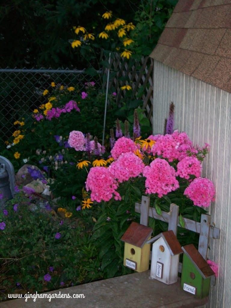Group of phlox, liatris, black-eyed susan, jolly bee geranium.
