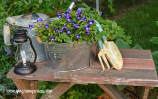 Barnwood bench in garden with watering can vignette.