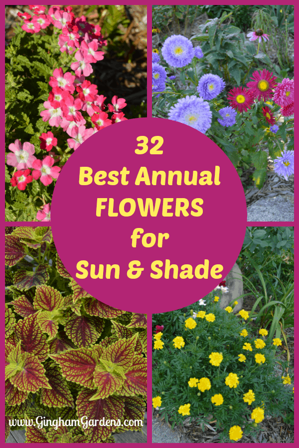 32 Best Annual Flowers for Sun & Shade