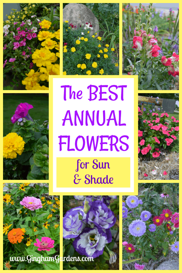 The Best Annual Flowers for Sun & Shade