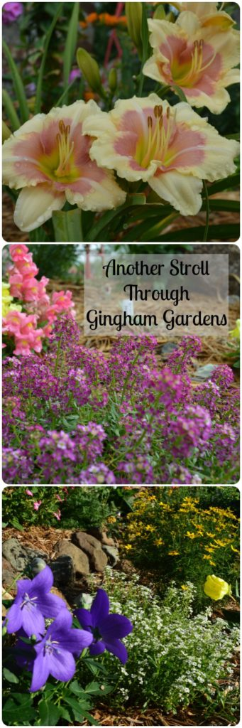 Another Stroll Through Gingham Gardens
