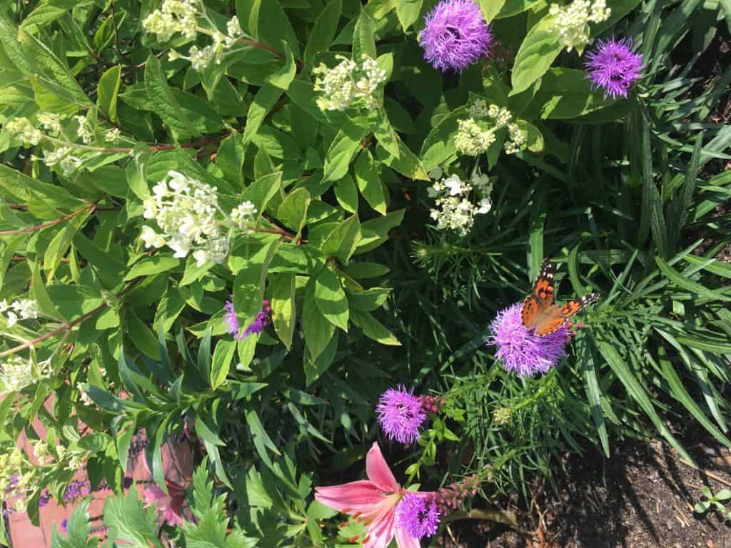 Monarch at Munsinger Gardens featured at Gingham Gardens
