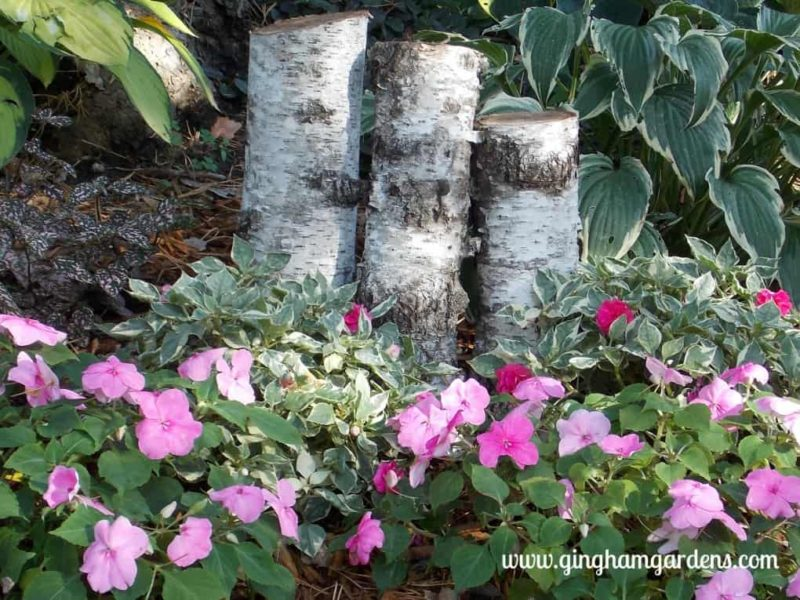 Variegated Impatiens & Pink Impatiens - The Best Annual Flowers