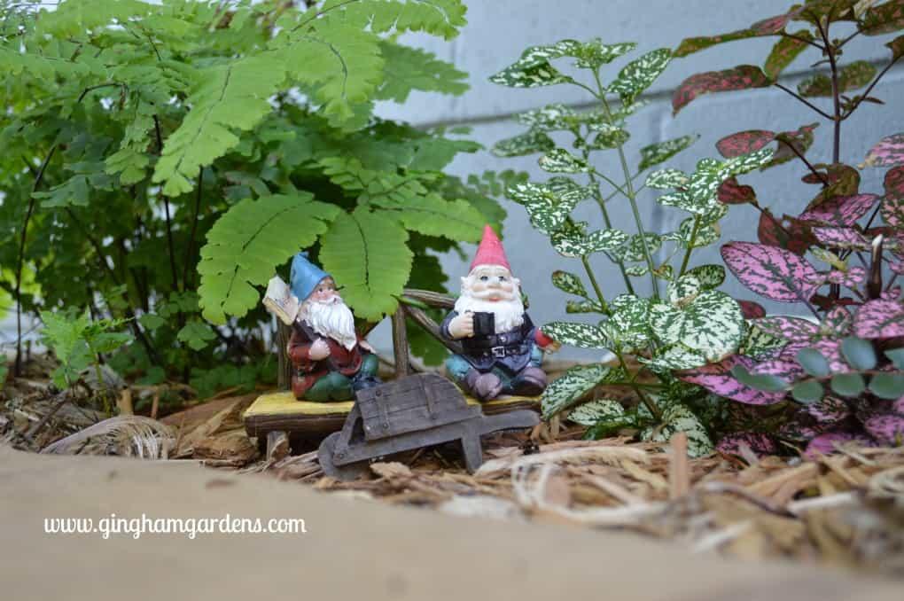 Miniature Gnome Garden or Fairy Garden with Maidenhair Ferns and Hypoestes