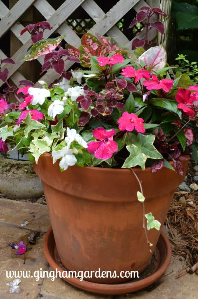 Container Garden - shady annuals - coleus, caladium, impatiens, new guinea impatiens, and ivy.