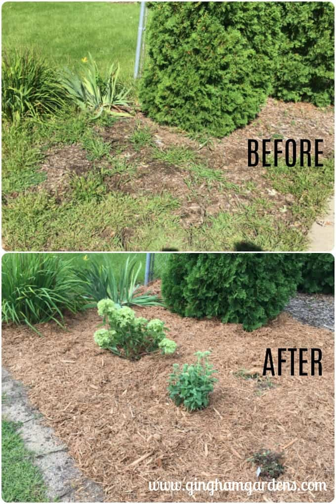 Before & After Flower Bed at Gingham Gardens Garden Tour