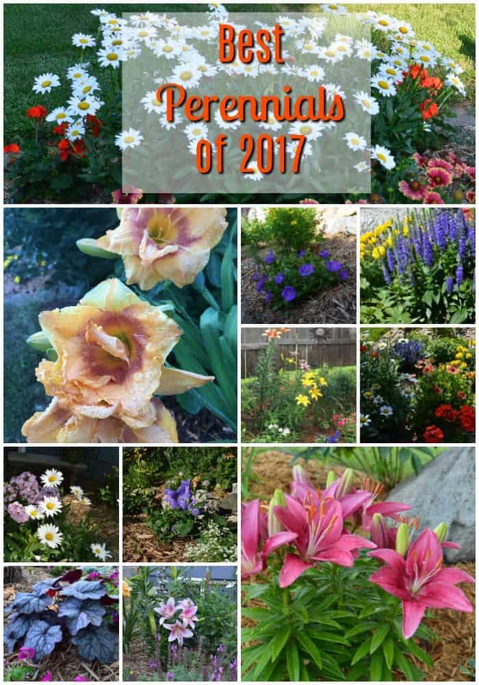 Best Perennials of 2017 at Gingham Gardens