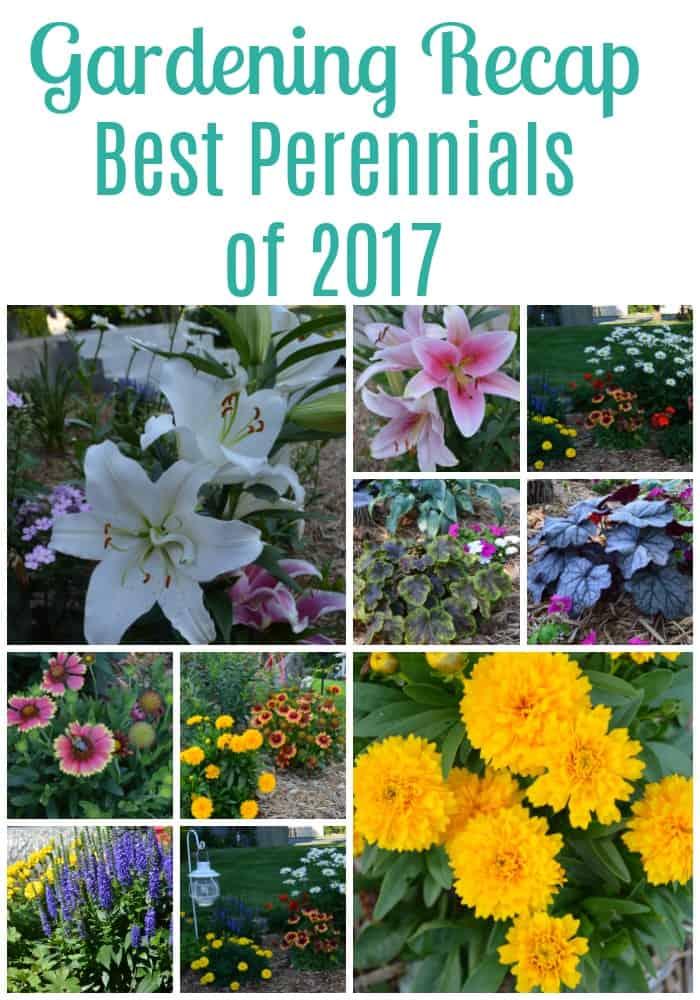Best Perennials of 2017