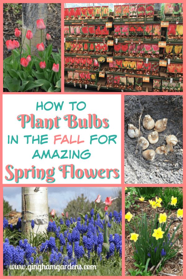 How to Plant Bulbs in the Fall for Amazing Spring Flowers