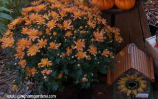 Fall Vignette - Quick & Easy Steps for Fall Garden Cleanup