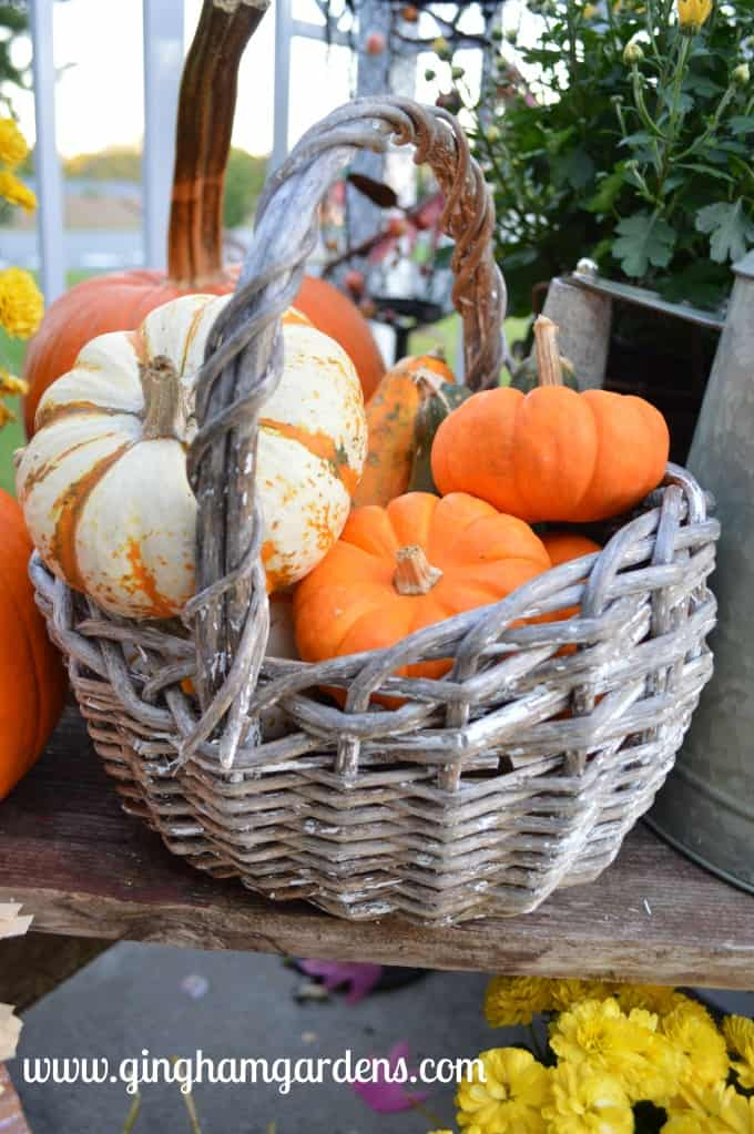 Fall Porch Decor - Chippy white vintage basket with pumpkins