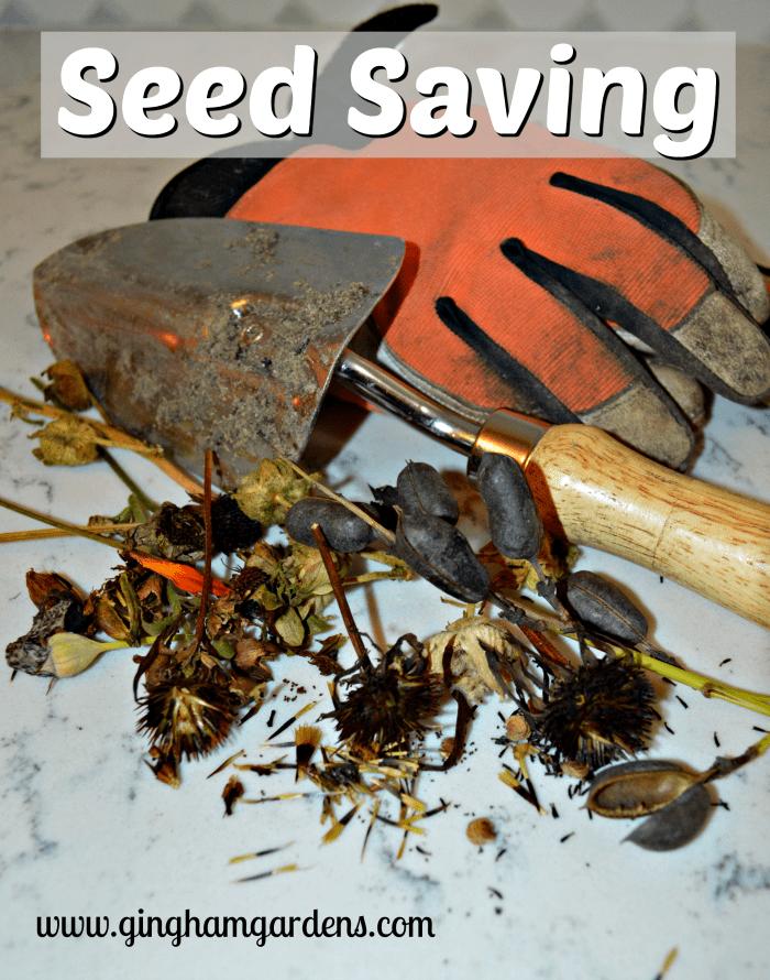 Fall Gardening - Seed Saving or Seed Gathering