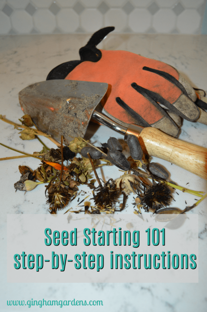 Seed Starting 101 | plant propagation