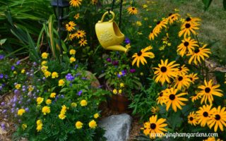 Blackeyed Susan and Marigolds - a beautiful mix of yellow flowers