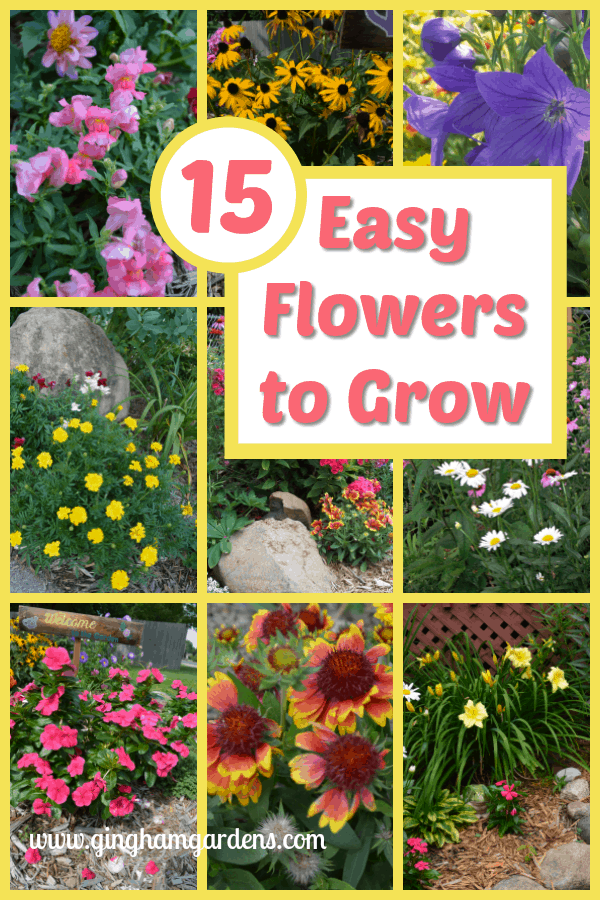 15 Easy to Grow Flowers