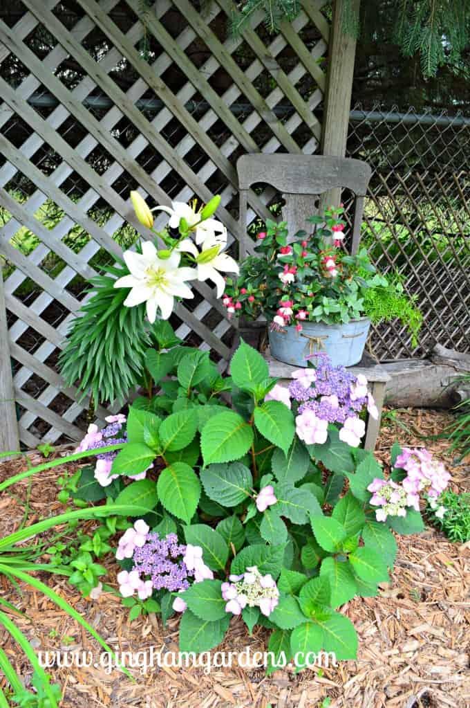 Shade Garden Vignette
