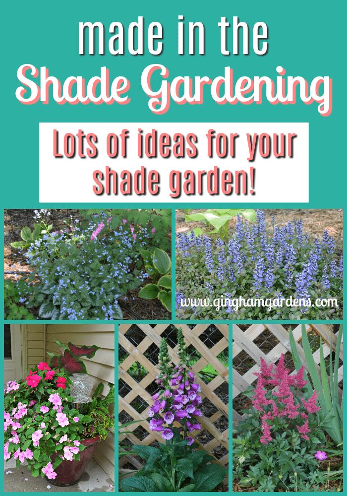 Shade Gardening - Lots of Ideas for Your Shade Garden