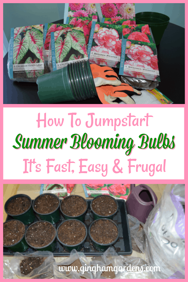 How to Start Summer Blooming Bulbs Indoors