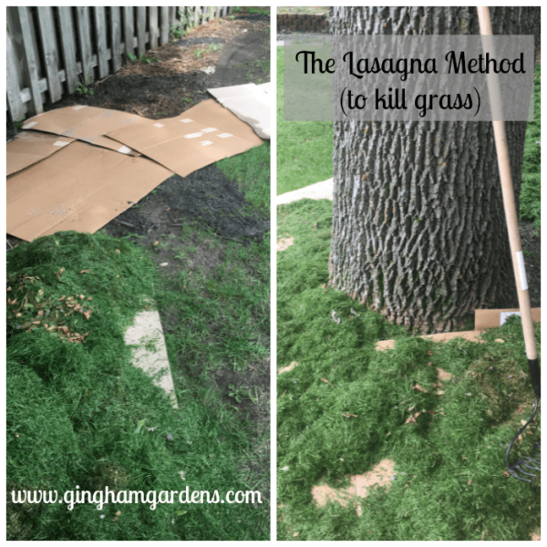 Kill Grass With The Lasagna Method