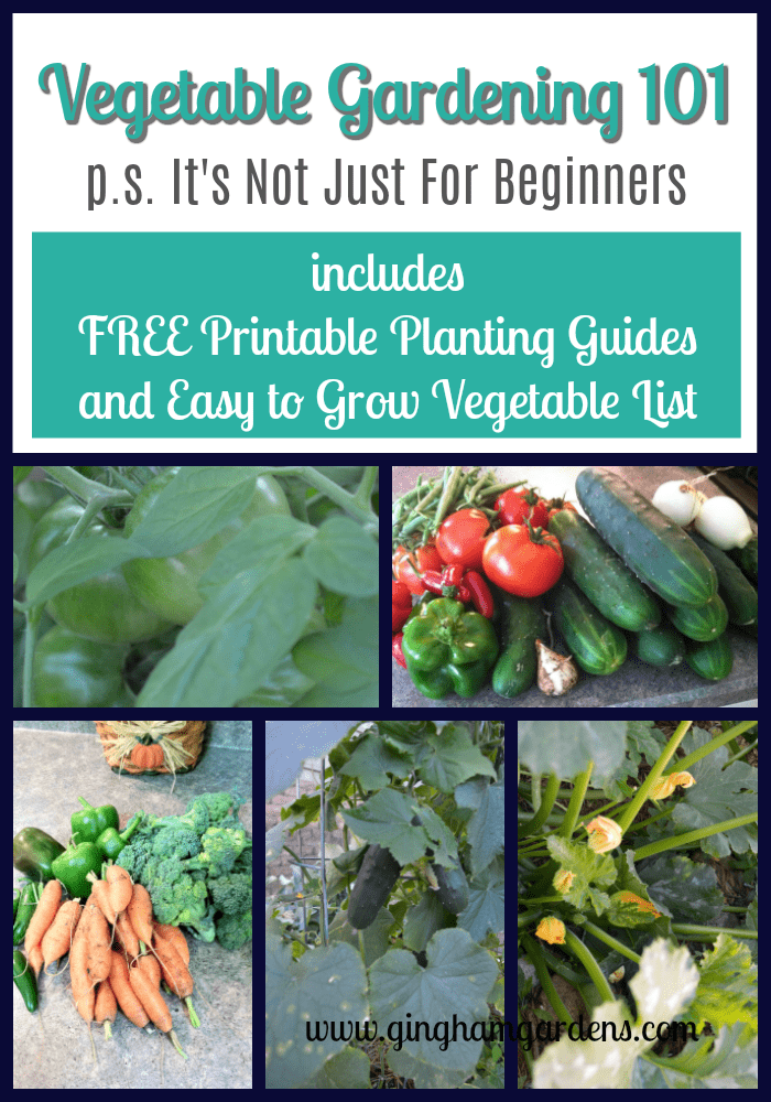 Vegetable Gardening 101 - It's Not Just For Beginners