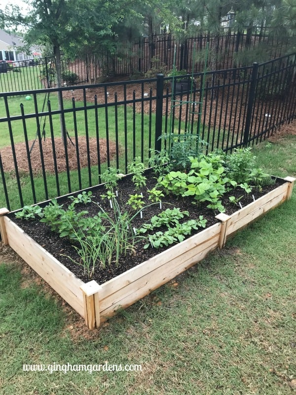Raised Vegetable Garden Bed