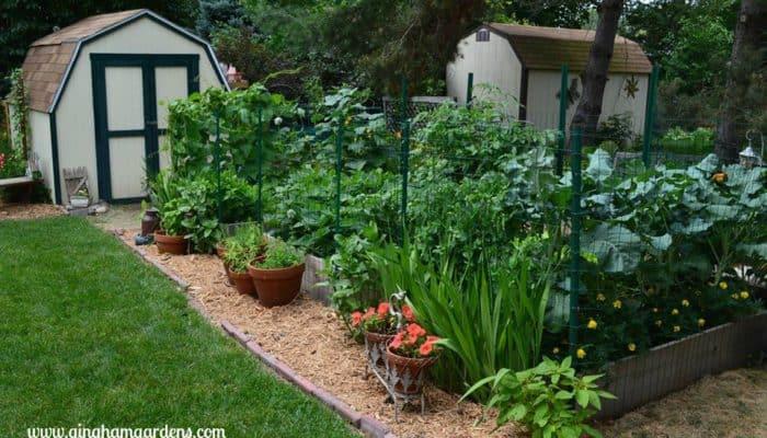 Vegetable Garden in Raised Beds