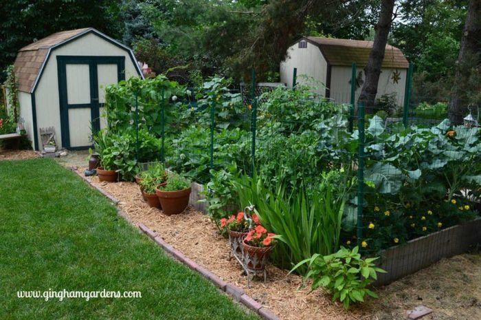Vegetable Garden in Raised Beds