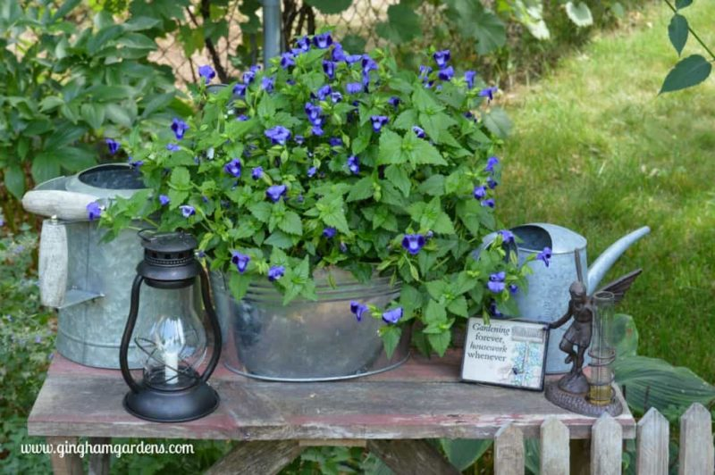 Garden Decor with Barnwood Bench