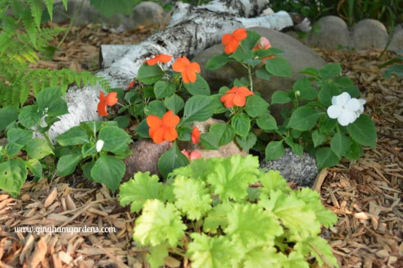 Orange and white impatiens with stones and birch logs.