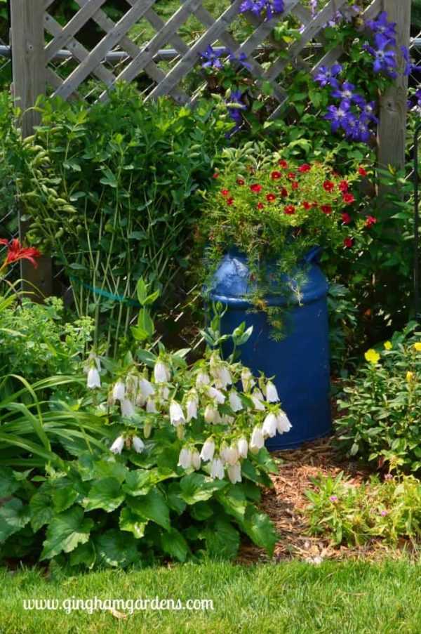 Vintage milk can in a flower garden.