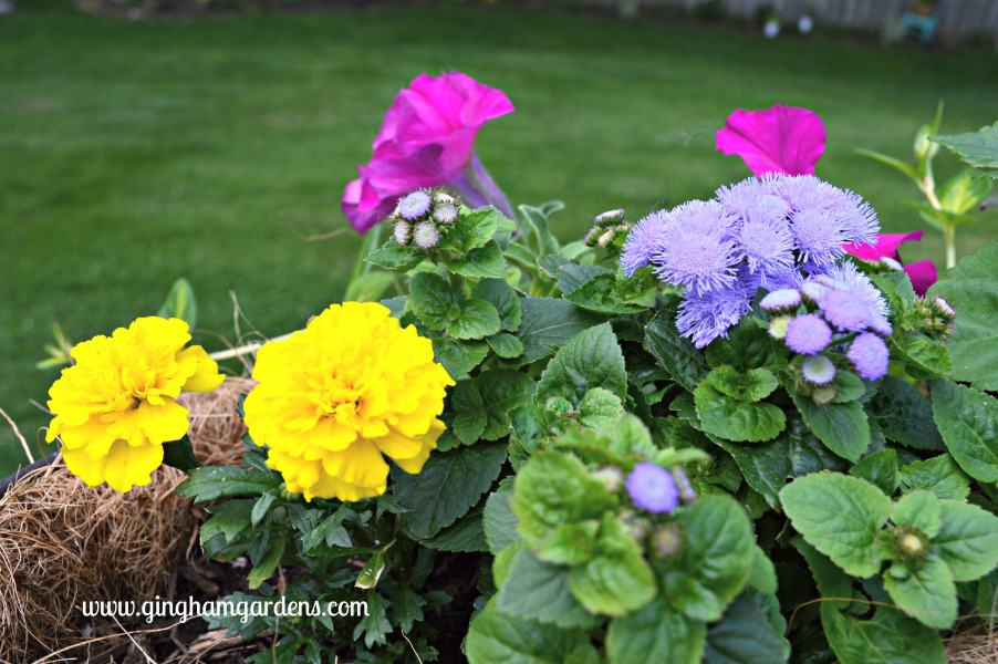 Marigolds, Petunias and Ageratums in a Deck Rail Planter