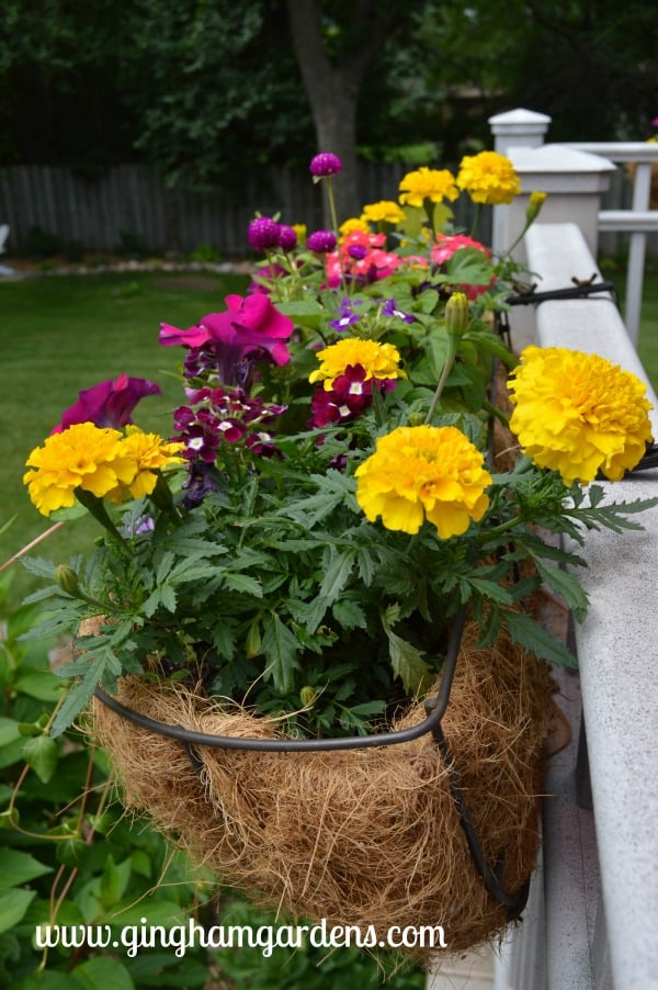 Deck Rail Planter with Annual Flowers