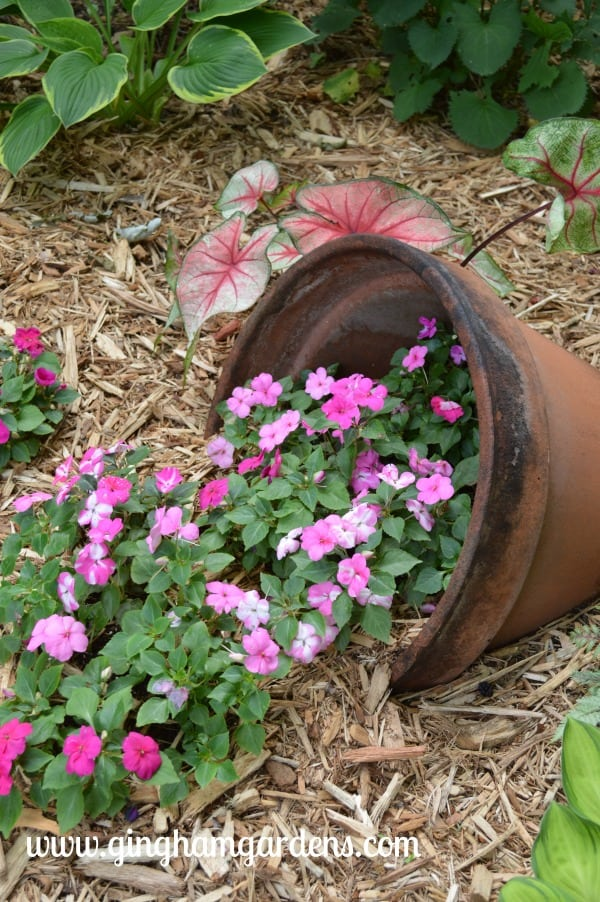 Tipped over pot with Impatiens spilling out.