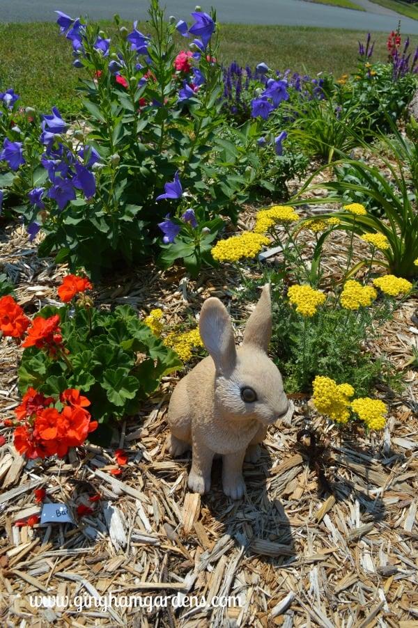 July Flower Garden Tour - Balloon Flower, Little Moonshine Yarrow & Orange Geranium