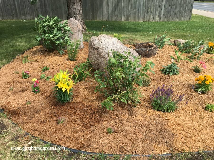 Flower Garden Makeover - During