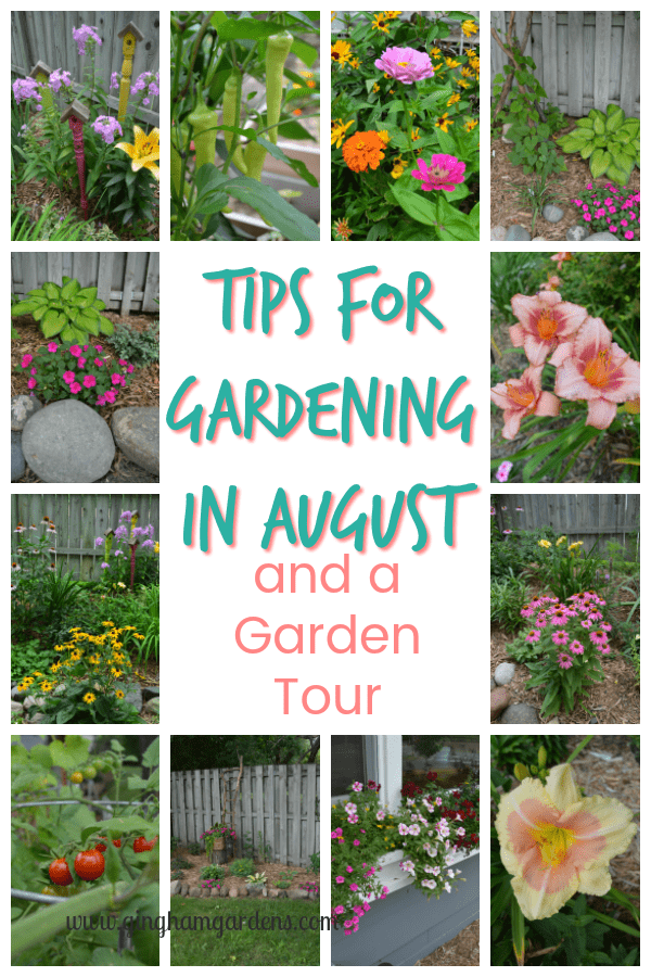 Tips for Gardening in August and a Garden Tour