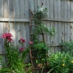 DIY Garden Trellis Using Branches with Silver Lace Vine
