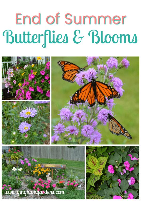 End of Summer Butterflies & Blooms