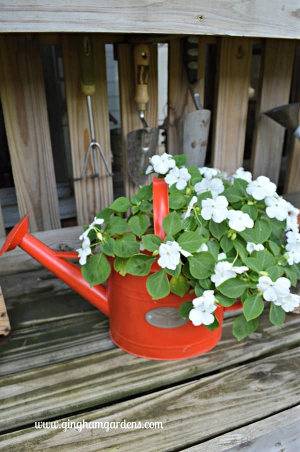 Watering Can with White Impatiens - End of Summer Butterflies & Blooms