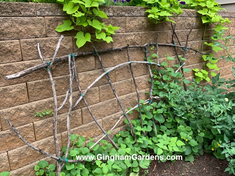 Image of a Garden Trellis made from tree branches