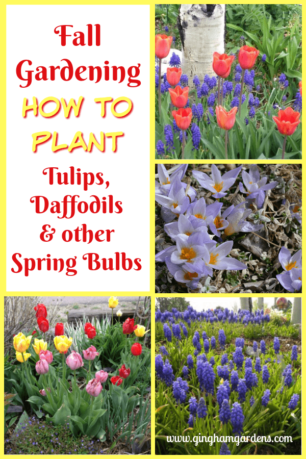 How to Plant Tulips, Daffodils & Other Spring Bulbs