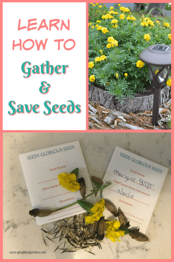 How to Gather & Save Seeds