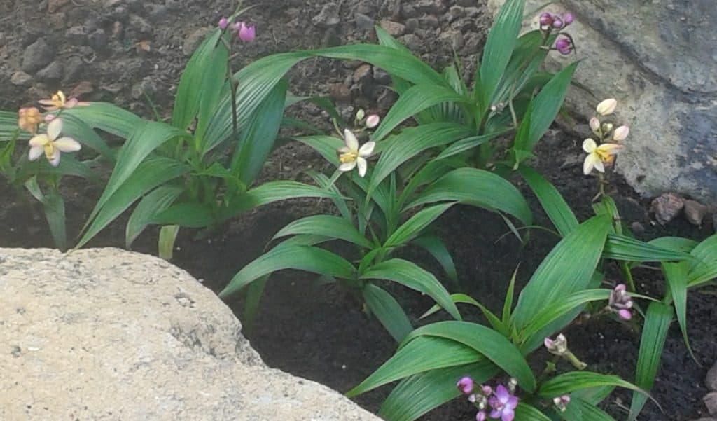 Orchids - Gingham Gardens Readers' Garden Tour