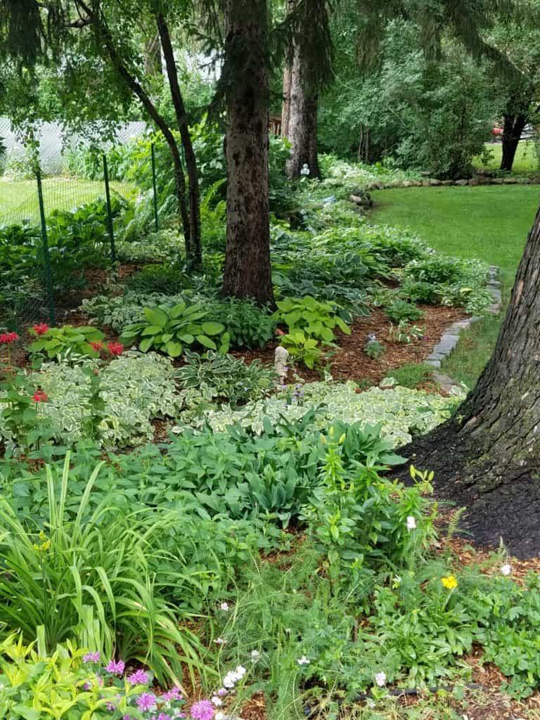 Shade Garden - Gingham Gardens Readers' Garden Tour