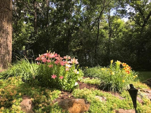 Lilies - Gingham Gardens Readers' Garden Tour