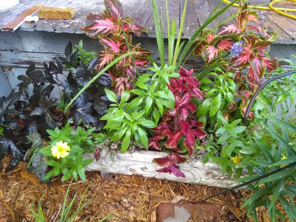 Container Gardens - Gingham Gardens Readers' Garden Tour