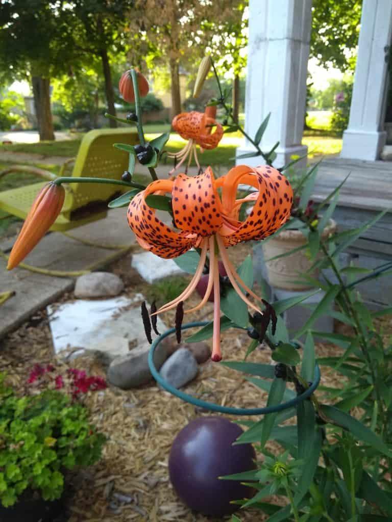 Tiger Lily - Gingham Gardens Readers' Garden Tour