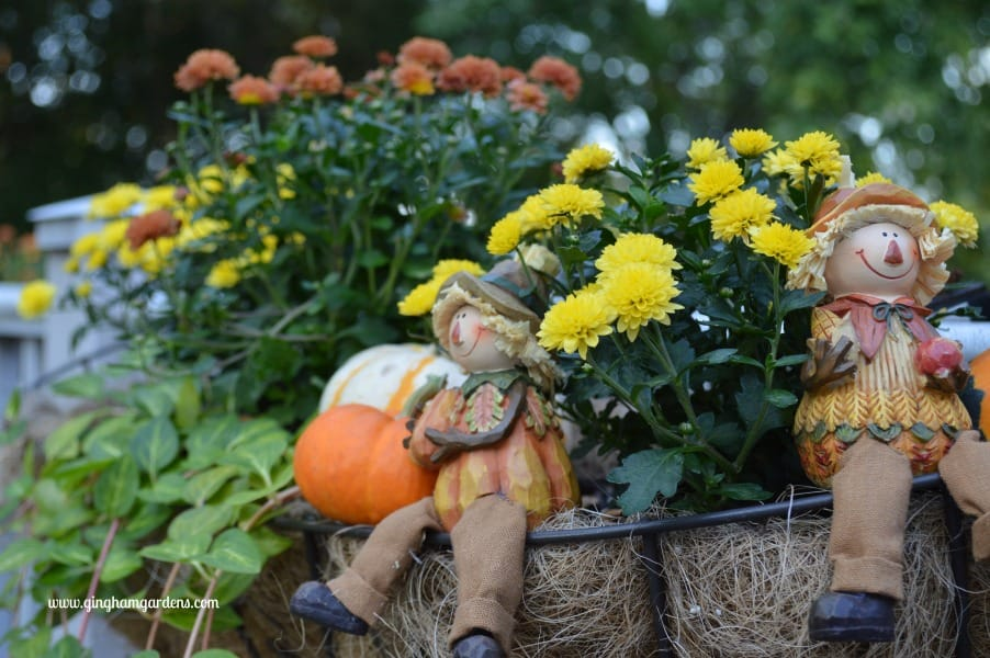 Fall Decor - Tips on Transitioning Container Gardens to Fall