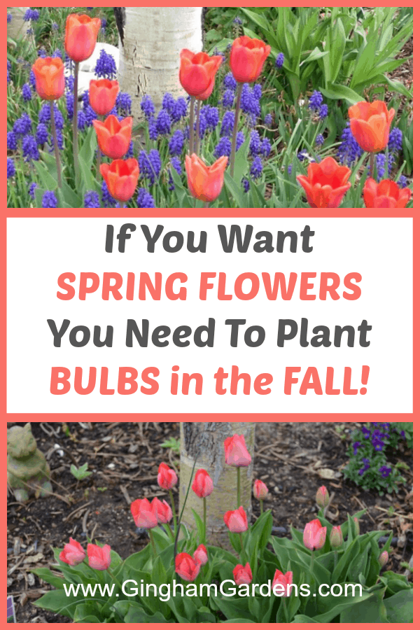 Planting Spring Flowering Bulbs in the Fall