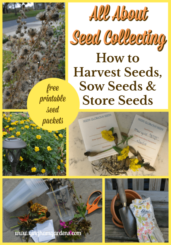 How to Harvest Seeds, Sow Seeds & Store Seeds